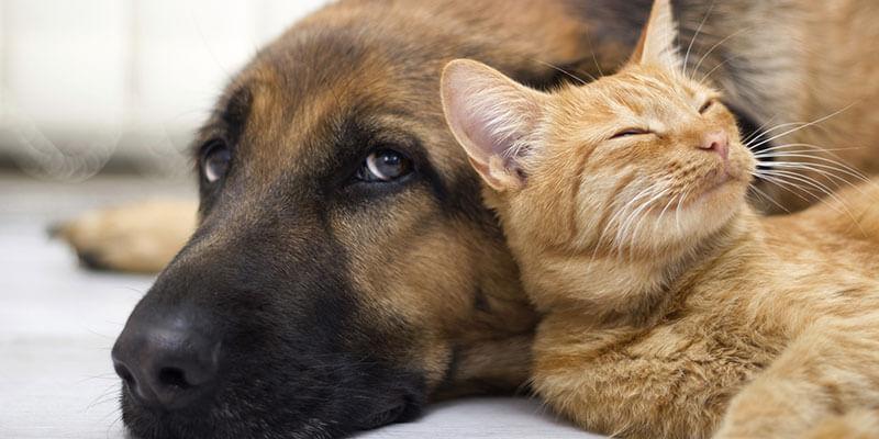 O comportamento dos Pets na hora de conhecer o novo lar