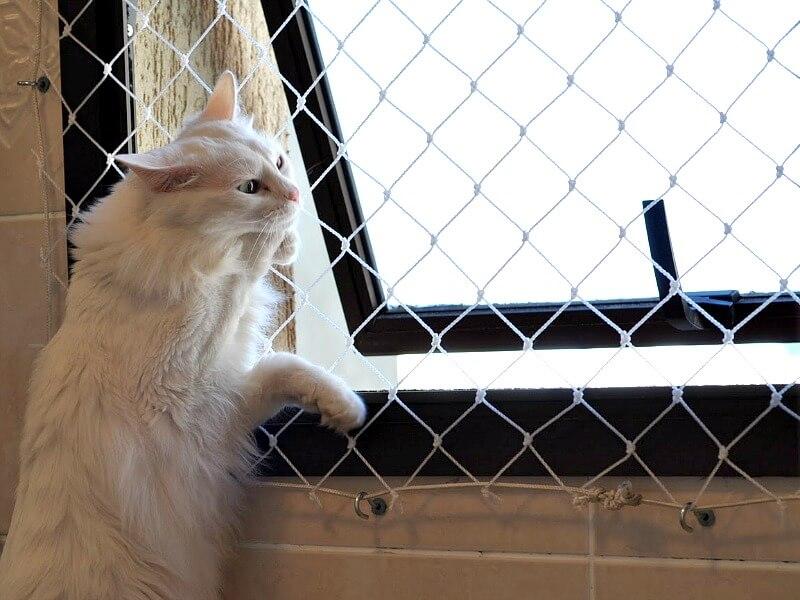 Telas em janelas e sacadas são necessárias para proteger os pets