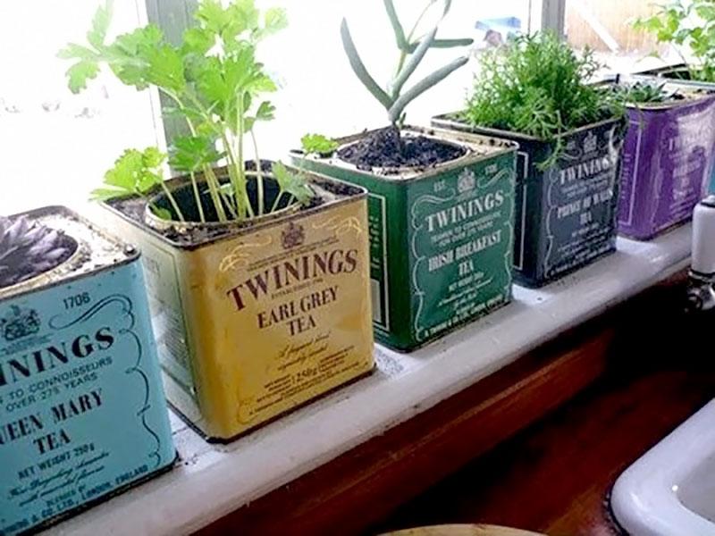 Mini horta feito com latas coloridas retrô