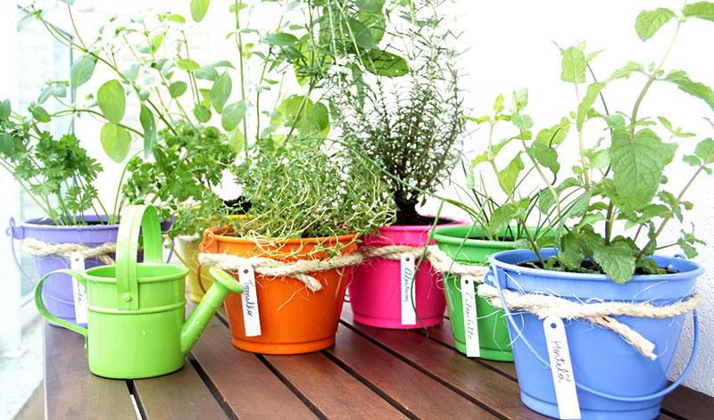 Latas pintadas para mini horta em casa