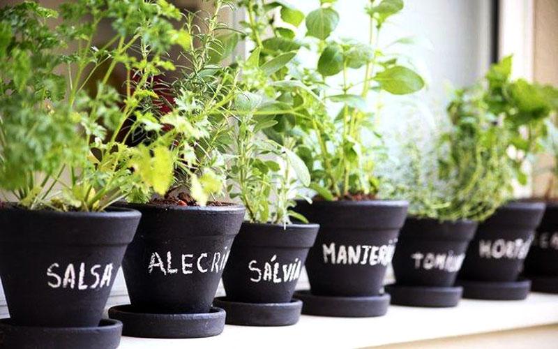 Mini horta com salsa, alecrim e ervas