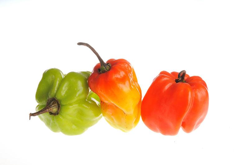 Benefícios da pimenta Habanero