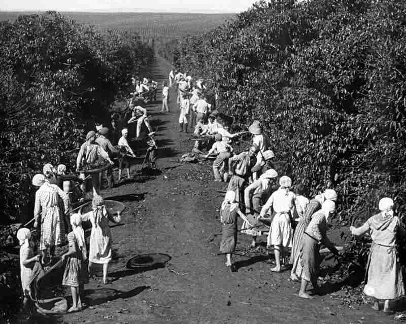 Imigração, a história do café