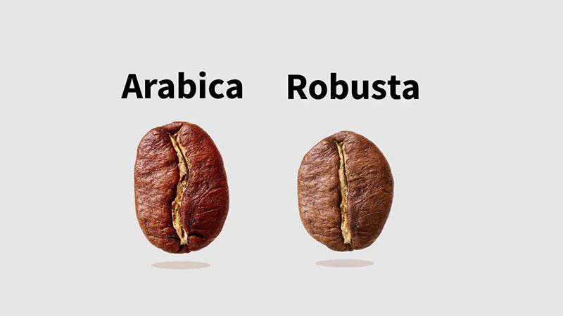 Plantio do café e variedade de grãos