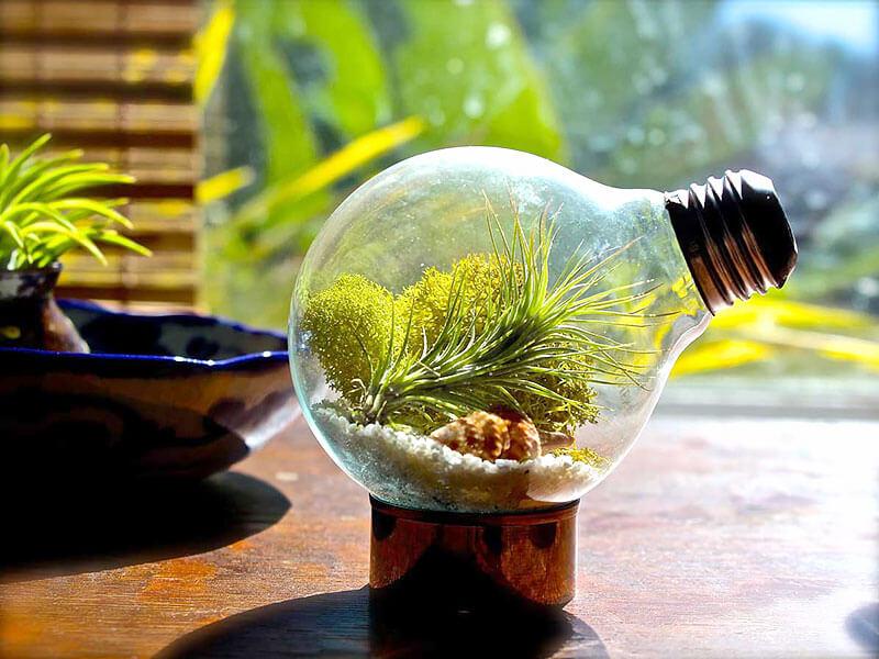 Suculenta plantada na lâmpada
