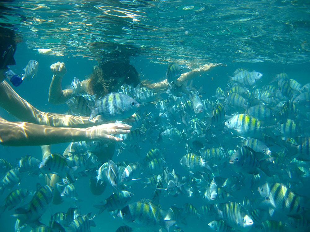 Mergulho na Ilha Comprida em Paraty