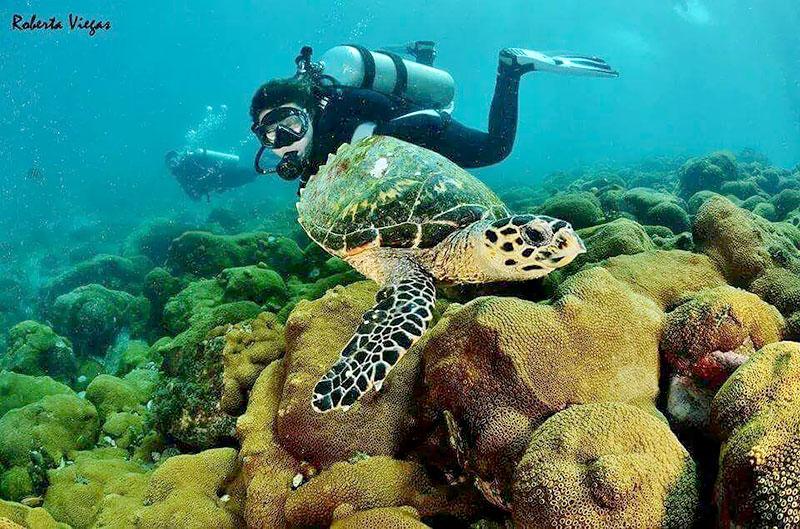 Mergulho em Arraial do Cabo - RJ