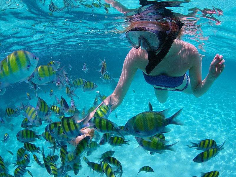 Mergulho - Snorkeling em Arraial do Cabo - RJ