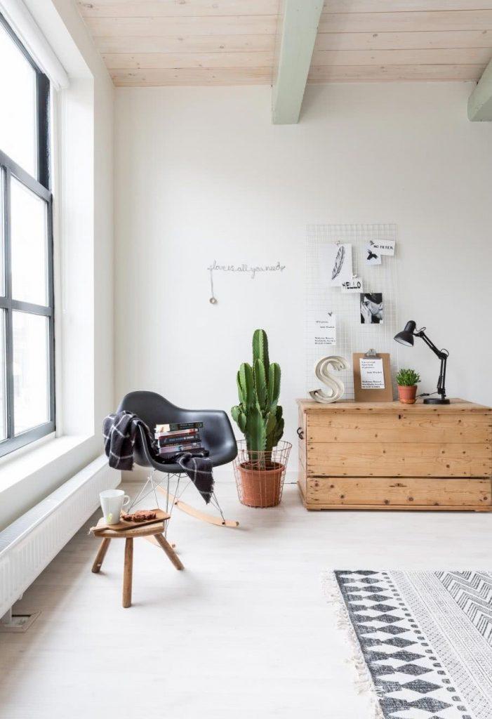 Plantas para ter dentro de casa: Cactos no interior
