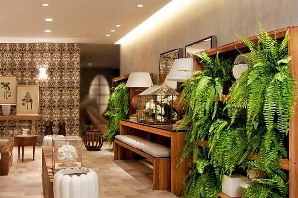 Plantas para ter dentro de casa: Samambaias em estantes
